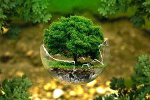 Adopt-Environmental-Sustainability